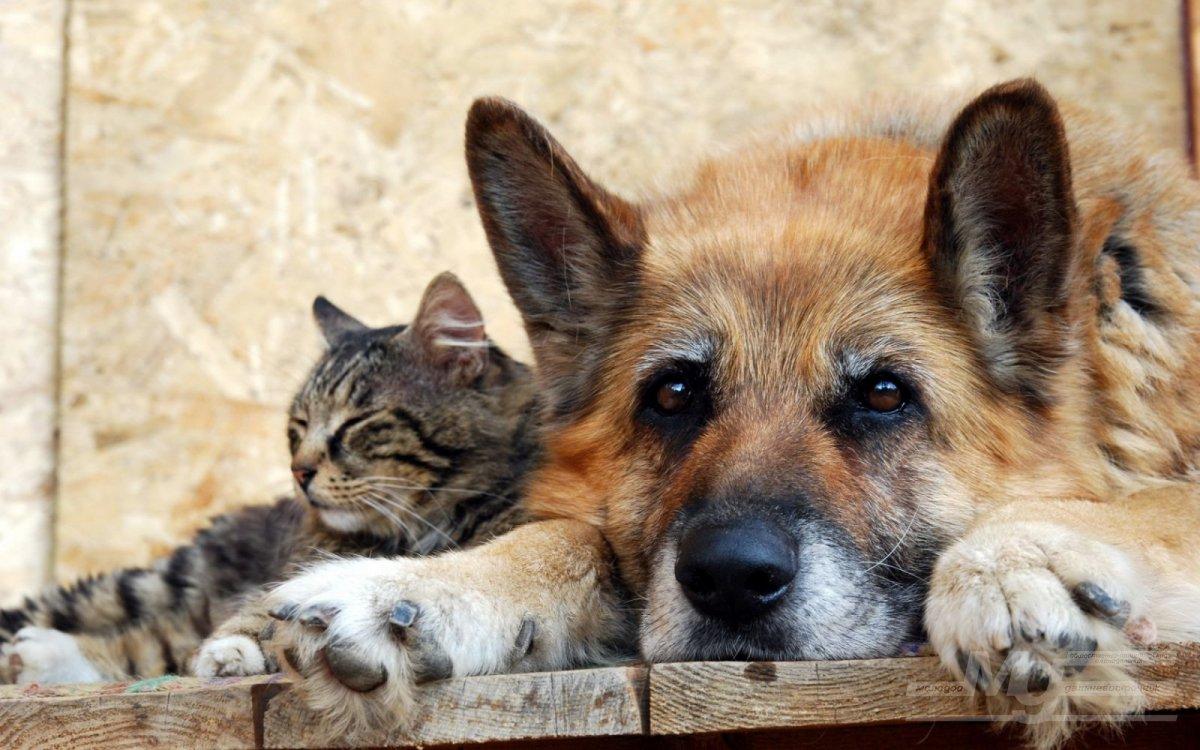 Введена уголовная ответственность за жестоко обращение с животными — живодерство