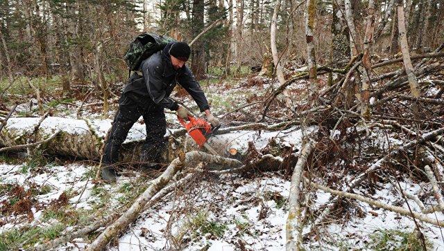 Госдума разрешила россиянам бесплатно собирать упавший в землю лес