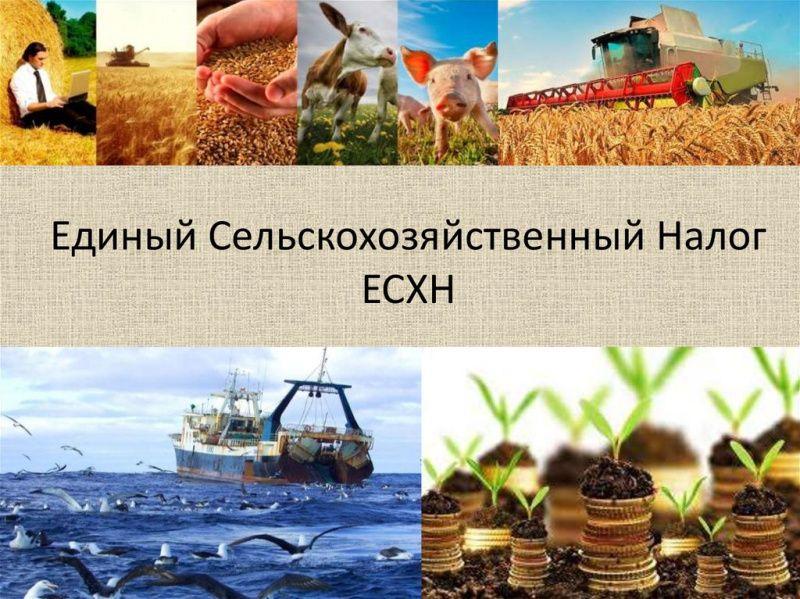 Единый сельскохозяйственный налог (ЕСХН, сельхозналог)